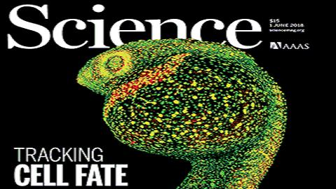 [표지로 읽는 과학] RNA 전사체가 좌우하는 세포의 운명
