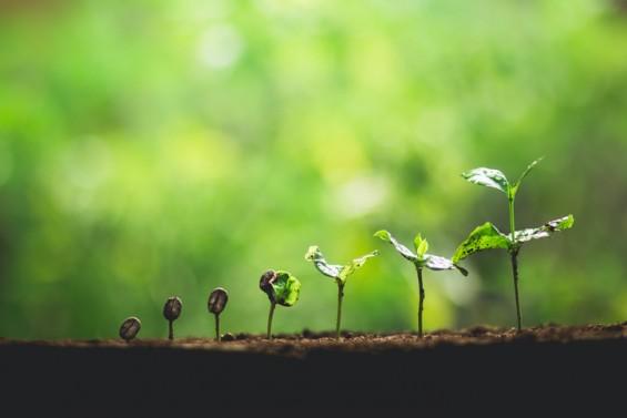 [짬짜면 과학 교실] 스스로 돕는 식물의 생존법
