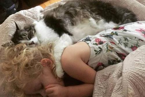 아기를 껴안은 다정한 고양이