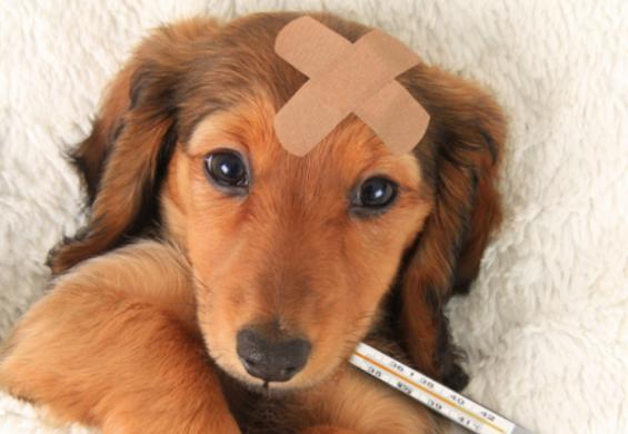 개 사이에도 독감 대유행 덮칠 수 있다