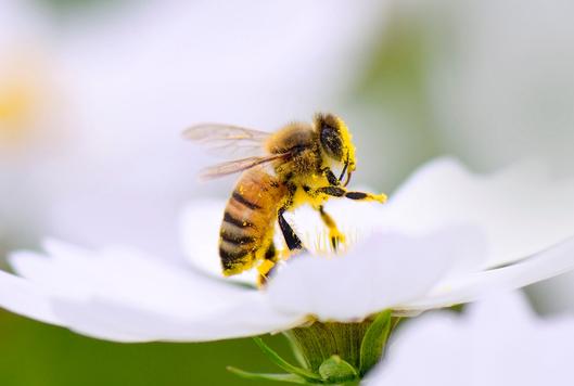 꿀벌도 이해하는 0의 개념... 0에 대한 궁금증들