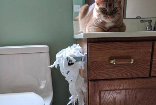 고양이의 만행과 뻔뻔한 표정