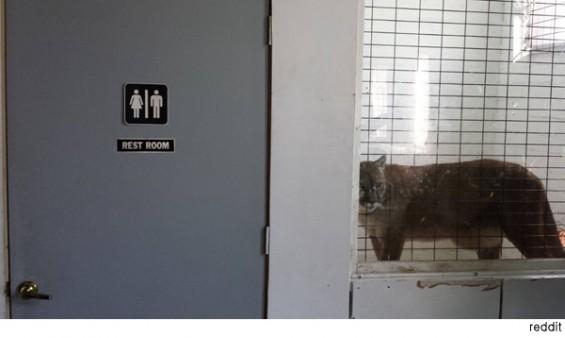 세상에서 가장 위험한 화장실