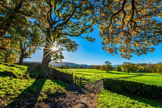 온실가스 CO₂→ 필수자원 '포름산' 바꾸는 인공나뭇잎 개발
