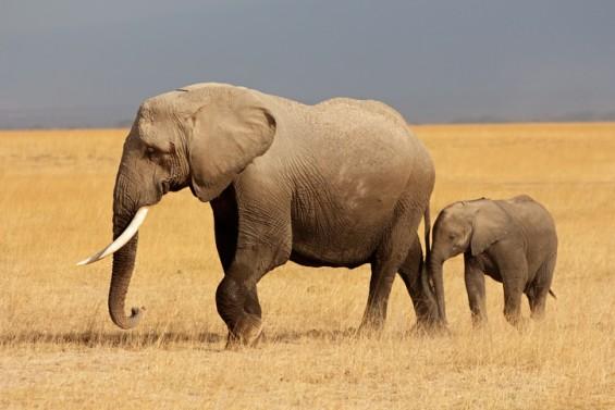 [짬짜면 과학 교실] 코끼리 가족에게 배우는 '물체의 운동'