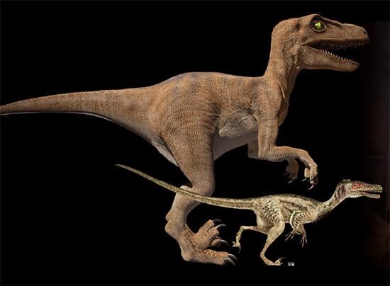 영화 '쥬라기 공원'과 '쥬라기 월드'에 등장하는 벨로시랩터는 몸길이 2~3m로 사람보다 훨씬 크고, 악어처럼 생긴 얼굴에 피부는 털 없이 매끄럽다(왼쪽). 반면 최근 공룡학자들이 복원한 벨로시랩터는 몸길이가 약 1.2m이며 깃털로 뒤덮여 있어 새와 비슷하다(오른쪽) - 사진 GIB 제공