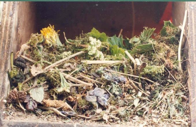흰점찌르레기의 둥지. 각종 허브를 이용해 만든다. HELGA GWINNER 제공.