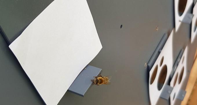 가장 적은 수로 빈 그림을 고른 꿀벌 - RMI 제공