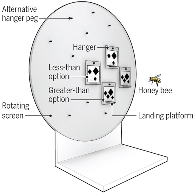 먼저 꿀벌에게 1~4개의 숫자를 제시해 적은 수를 고르도록 훈련시켰다. - RMI 제공