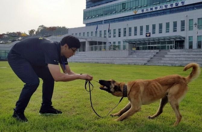 경기북부경찰청의  체취견 미르가 최연진 핸들러(경사)에게 훈련을 받고 있다-경기북부경찰청 제공