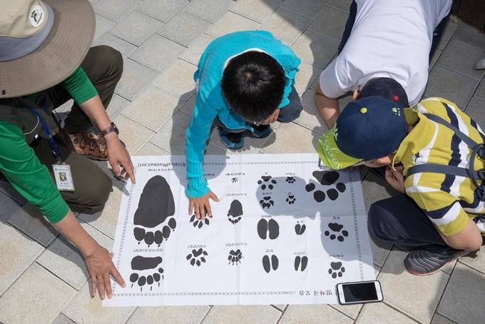 야생동물의 발자국 크기를 비교해 보는 모습. - 어린이과학동아 2018년 11호 제공