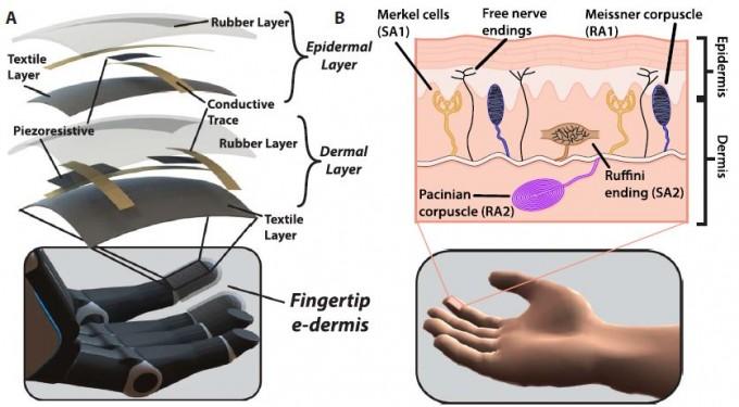 피부(오른쪽)를 모방해 만든 전자피부의 구조(왼쪽)로 표피층(epidermal layer)에 통증으로 지각될 압전저항(piexoresistive) 센서가 있고 진피(dermis)층에 촉각으로 지각될 센서가 있다. 전자피부는 실리콘고무 재질로 두께는 1mm다. - '사이언스 로봇공학' 제공