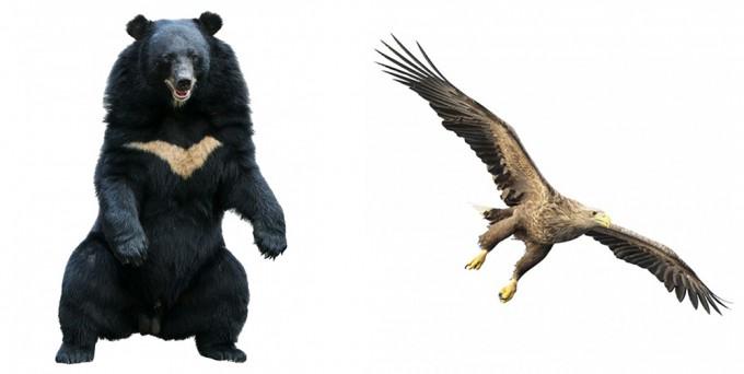 반달가슴곰(좌), 흰꼬리수리(우) - GIB 제공