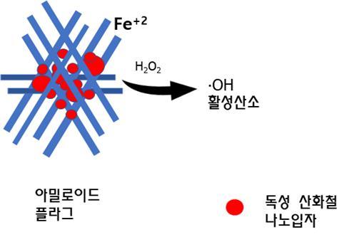 2가 철이온을 가지는 아밀로이드 플라그로부터 산화철 표면에서 활성산소(•OH)가 생성되는 모습. 생성된 활성산소는 그리드 세포 등 신경세포를 손상시켜 치매증상을 유발함. - 한국연구재단