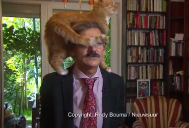 TV 인터뷰를 방해한 고양이