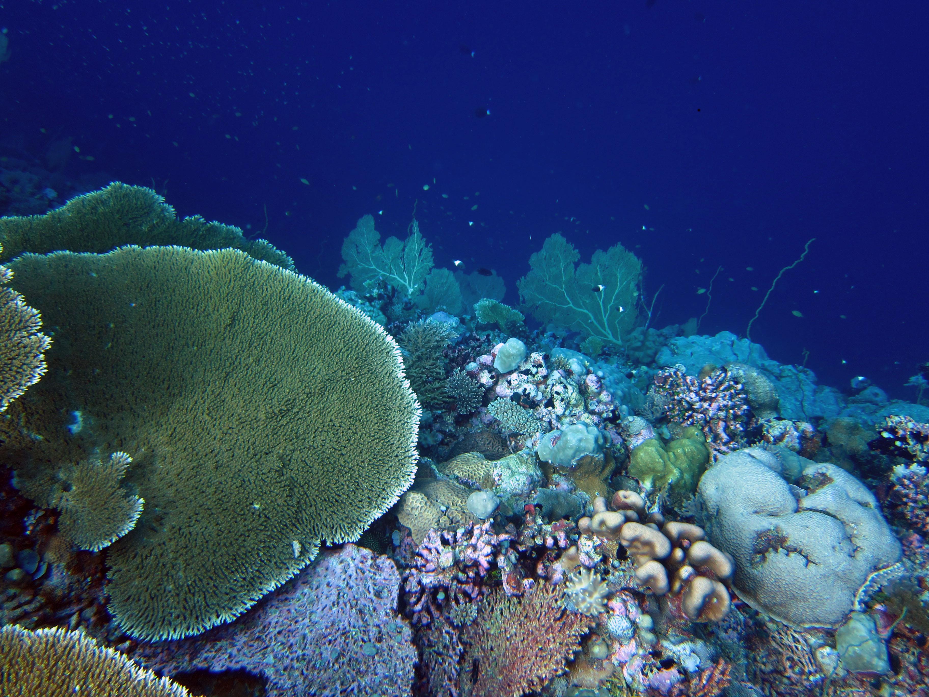 차고스제도의 산호초 - 닉 그레이엄