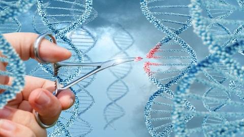 """유전자가위 오작동 우려?...""""크리스퍼는 과대평가됐다"""" 영국 연구팀 주장"""