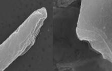 정자 머리-꼬리 이어주는 단백질 찾았다