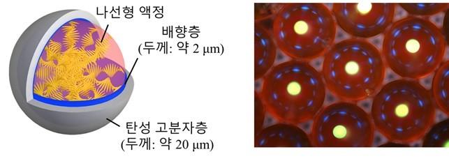 공 모양 레이저 기기의 구조(왼쪽)과, 광학 현미경으로 관찰한 사진(오른쪽). -사진 제공 KAIST