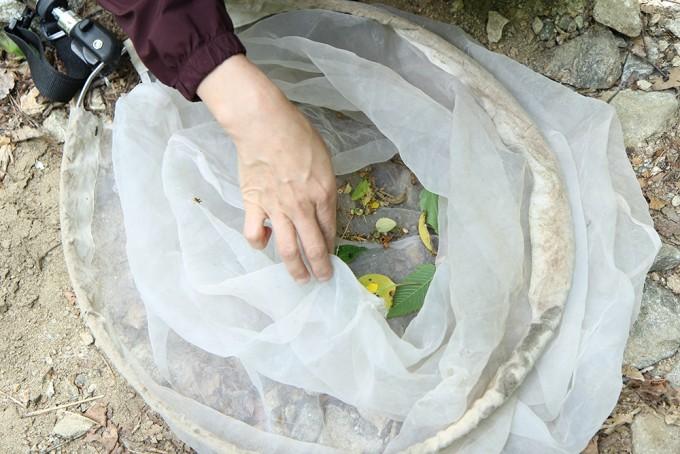 채집망 안에 떨어진 곤충을 찾는 모습. - 어린이과학동아 2018년 13호 제공