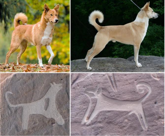 1월 9일자 <9000년 전 사냥개의 활약상 생생하게 묘사된 암각화 감상법> 자료사진 중 - 인류학적 고고학 저널(Journal of Anthropological Archaeology) 제공