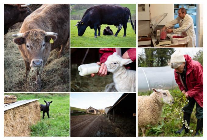 농장의 스토리를 담은 사진들 - https://sustainablefoodtrust.org 제공
