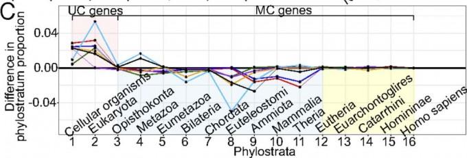 정상세포에 비해 단세포성이 커진 게 암세포라는 걸 증명하는 실험 데이터다. 사람 유전자를 진화 역사에 따라 16단계로 분류한 뒤 각각의 유전자 발현패턴을 비교해보면 암세포에서 단세포 유전자(1~3단계)는 발현량이 는 반면 다세포 유전자는 줄거나(4~11) 변화가 없다(12~16). 깃편모충류와 동물의 공동조상인 후편모류(Opisthokonta)가 변곡점임을 주목하라. - '미국립과학원회보' 제공