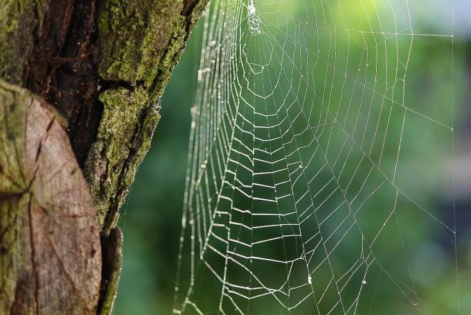 강철보다 강한 거미줄의 비밀 풀렸다 - 사진 pixabay 제공