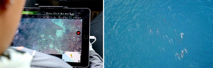 드론으로 남방큰돌고래 무리를 관찰하고 있는 김미연 연구원과 이를 촬영한 모습. - 어린이과학동아 2018년 14호 제공