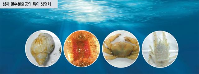 한국해양과학기술원 연구진이 인도양에서 새로운 '심해 열수분출공'을 발견해 그 주변에 서식 중인 열수 생물을 채집했다. 소라, 게, 새우 등 다양한 특이 생물을 확인할 수 있다. - 해양과학기술원 제공