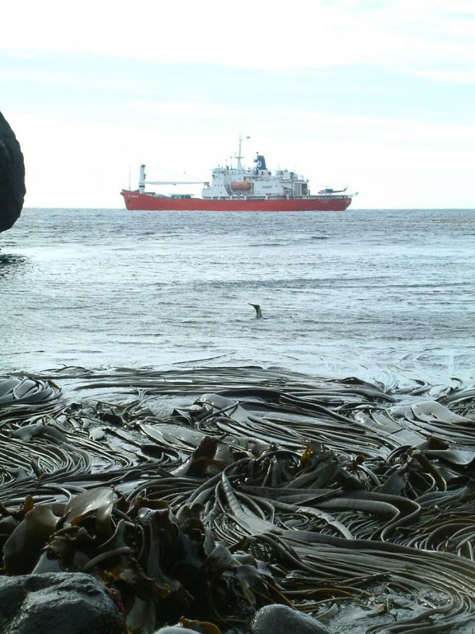 세리드웬 프레이저 호주국립대 수석연구원이 남극 연안 마리온 섬에서 촬영한 다시마. - Ceridwen Fraser 제공