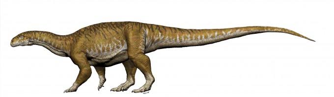 새로발견한 신종의 상상도, 목과 꼬리가 길고 다리는 굽어있는데 무게가 약 7~10톤에 달하는 공룡이다. 이 공룡에서 티라노사우르스같은 거대 수각류공룡 뿐아니라 초거대 용각류공룡으로 진화가 진행됐다고 설명했다.-Universidad Nacional de San Juan, San Juan 제공