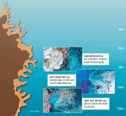 심해 산호초, 너마저!