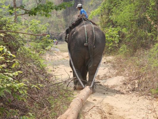 동물원에 온 야생 코끼리, 포획 후 1년간 사망확률 급증
