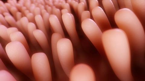 인간 소장 기능 갖춘 오가노이드 성숙화 기술 개발