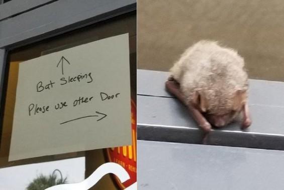 박쥐가 자고 있어요