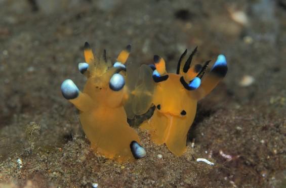 [팔라우 힐링레터] 갯민숭달팽이의 오래 지속되는 사랑