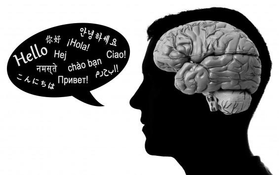 영장류-인류 언어 능력 차이, 비밀은 뇌 곳곳의 '크기'