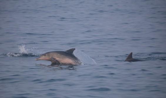 오늘은 나도 돌고래 연구자! 지구를 위한 과학, 제주 돌고래 탐사 열려