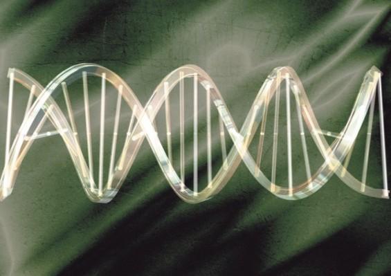 물리학 개념으로 DNA 작동원리 첫 규명
