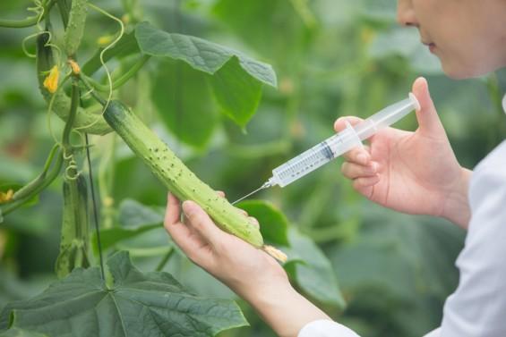 작년 GMO 수입량 줄었지만…연구용 전년 대비 24% 증가