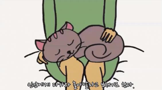 [과학 읽어주는 언니] 고양이는 야생동물일까 반려동물일까?