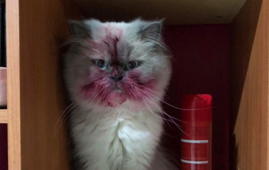 립스틱을 갖고 논 고양이