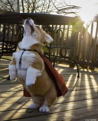하늘로 날아오르는 슈퍼 강아지