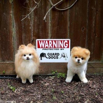 접근 마세요! 무서운 강아지들