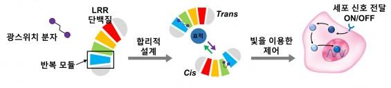 빛으로 치료 하는 '광스위치 단백질' 개발