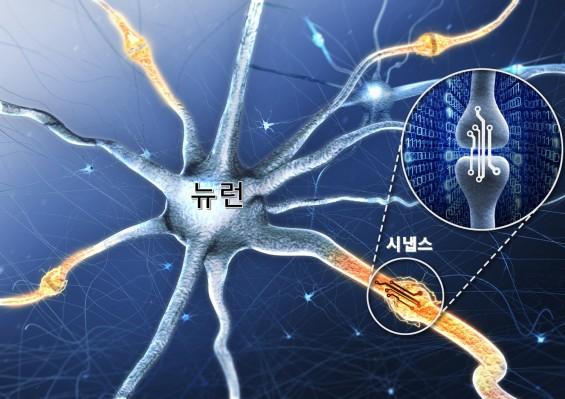 인간의 뇌 기능 흉내낸 '인공 시냅스 소자'나왔다