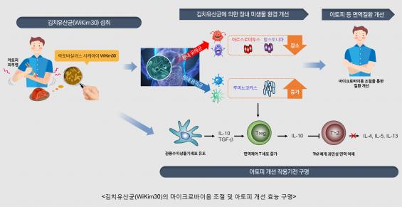 '아토피'에 효과있는 유산균 김치에서 찾았다