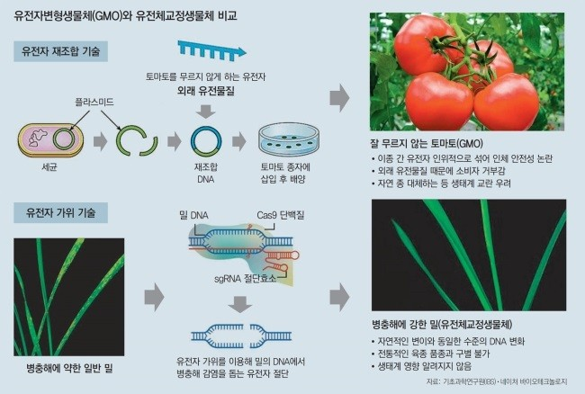 자료: 기초과학연구원(IBS)·기초과네이처 바이오테크놀로지