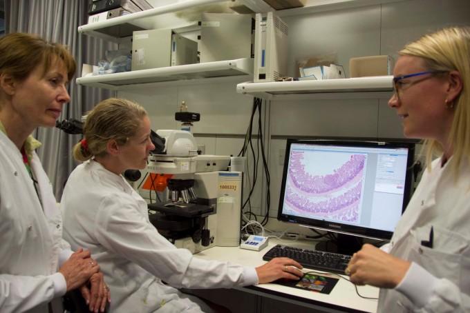프란시스크릭연구소 기타 스토킹거(맨 왼쪽) 교수팀이 현미경으로 쥐의 장세포를 확인하고 있다.- Francis Crick Institute 제공